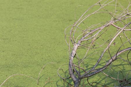 arboles secos: Árboles muertos en fondo verde