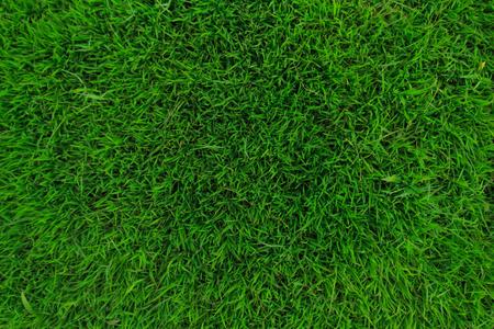 greengrass: greengrass area