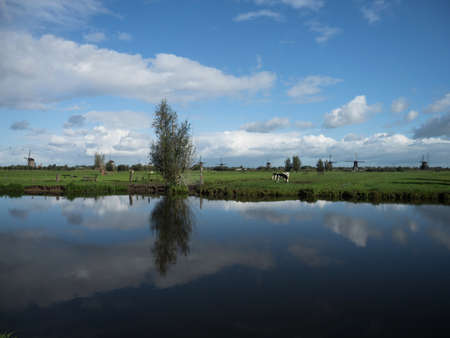 Panorama farmland cow field reflection at old historic Windmills at Kinderdijk Molenlanden South Holland Netherlands