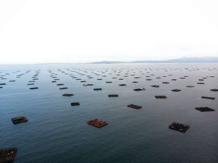 Aerial panorama of mussel farm platforms fishing industry aquaculture seafood production in O Grove Ria de Arousa Galicia Spain Europe