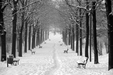 Garden lane with three covered with snow slightly foggy in black and white Stock Photo - 6499560