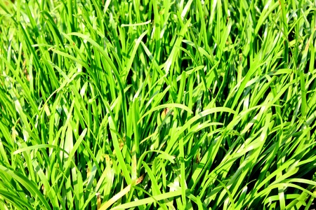 Leaves grass green photo