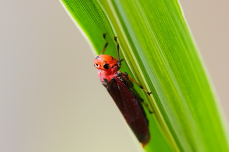 Small insects under the leaves photo