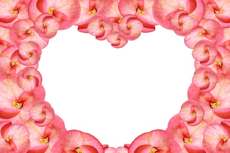 Pin flowers isolated on white photo