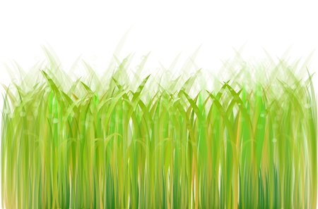 Fresh green grass isolated on white Vector