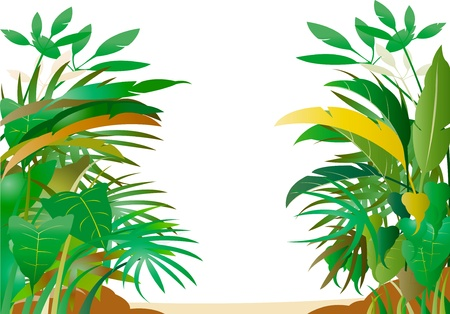 Tropical forest Stock Vector - 11383403