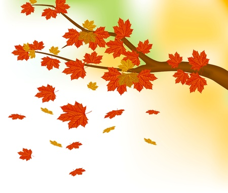 Maple branches in autumn  For background Illustration