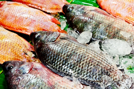 Fresh tilapia fish nature background Stock Photo - 18991625