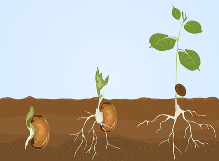 germination: Germination,Seed leaves nature background