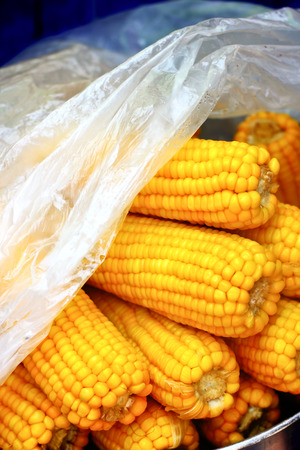 riped: steamed corn,vegetable food background