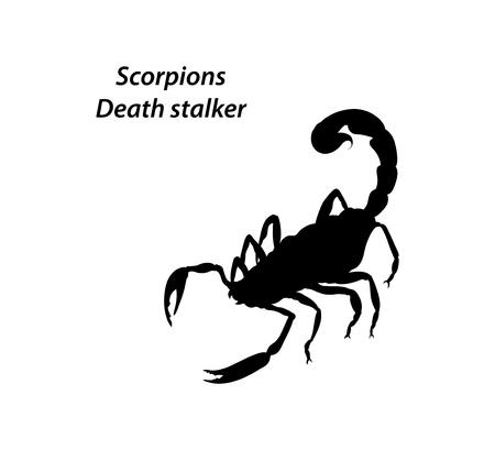 stalker: Scorpion Death stalker vector on a white background