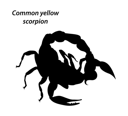 in common: Common yellow scorpion silhouette style vector on a white background
