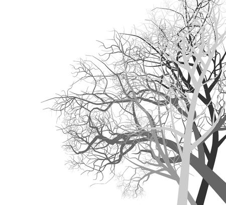 autumn scene: Autumn trees scene vector nature on a white background