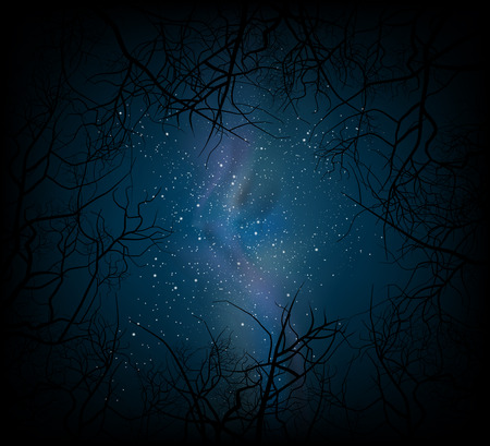 night sky stars: Night scene with trees and galaxy in sky nature background