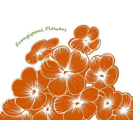 frangipani flower: Frangipani flower scene hand drawing vector on a white background Illustration