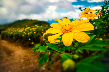 Beautiful Mexican flowers blooming on top mountain nature landscape background