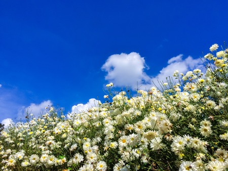 Beautiful flowers over blue sky nature background