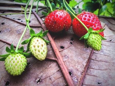 Freshness strawberry scene fruits and nature background Stock fotó