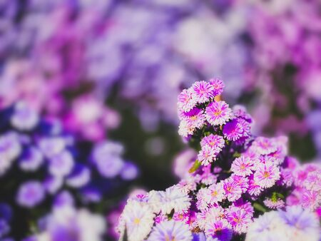 Colors flowers booming scene nature wallpaper backgrounds