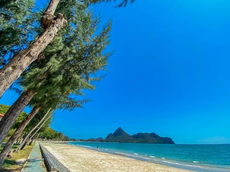 Beautiful view pine trees on the beach tropical island wallpaper backgrounds