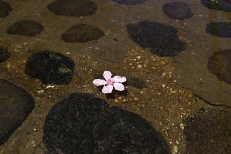 watergarden: Pink flower float on mini lake with stones