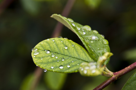 dewdrops: Dewdrops on plant leaf
