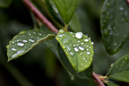 dewdrops: Dewdrops on plant leaves Stock Photo