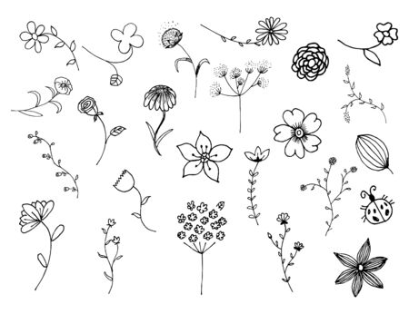 Hand drawn floral elements illustrations and vector set Ilustracja