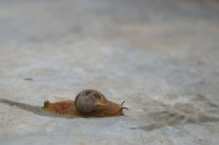 slow to go, slow life