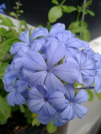 purple flower: Purple flower in the garden.