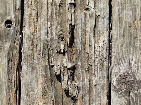 Background of damaged wood grain outdoors