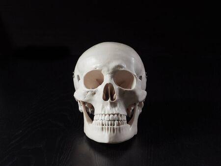 Specimen of the skull