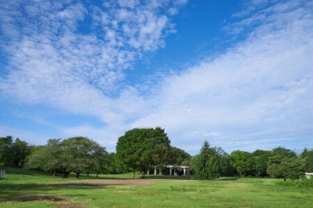 A park with lush vegetation, clouds and blue sky Stok Fotoğraf