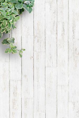 Witte achtergrondplaat, kamerplanten, verticaal