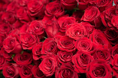 A bouquet of bright red roses inspired by marriage and love Standard-Bild
