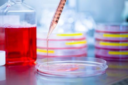 stem: Verser milieu de culture en boîte de Petri dans le laboratoire Banque d'images
