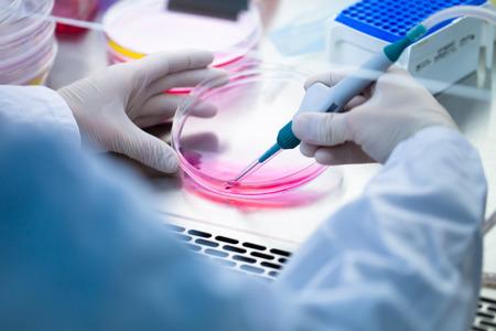 celulas humanas: El trabajo de laboratorio con cultivos de tejidos Foto de archivo
