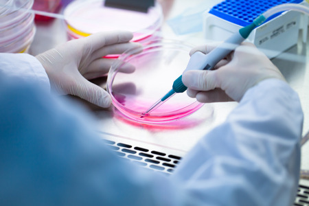 health care research: Laboratory work with tissue cultures
