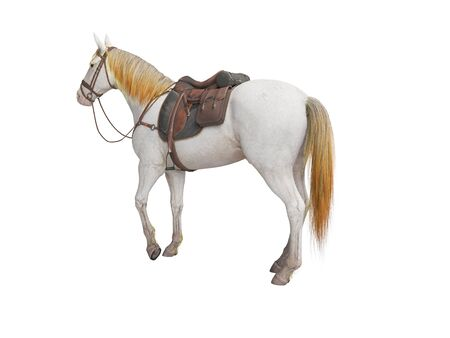 Horse white with bridle isolated 3d render on white background no shadow