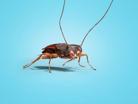 Cockroach crawling on the floor 3d render on blue background with shadow Stock fotó