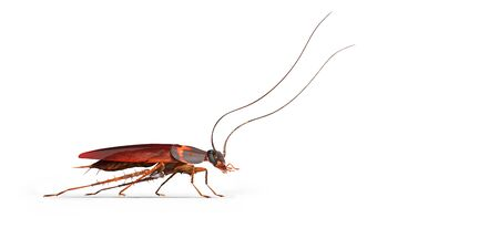Cockroach crawling to the right 3d render on white background with shadow