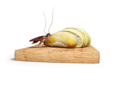 Cockroach eats white bread 3d render on white background with shadow