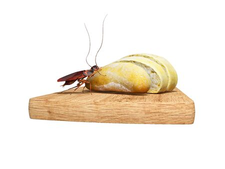 Cockroach eats white bread 3d render on white background no shadow