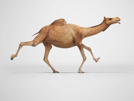 3d rendering concept of camel running on gray background with shadow