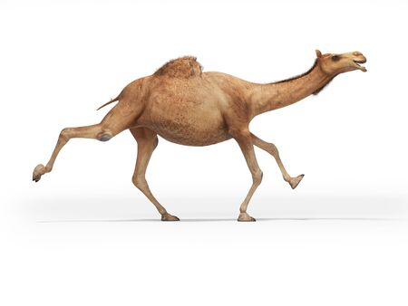 3d rendering concept of camel running on white background with shadow Фото со стока