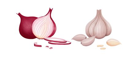 Rote Zwiebel geschnitten und ganz. Frischer Bio-Knoblauch und Zwiebel isoliert auf weißem Hintergrund. Vektor-Illustration