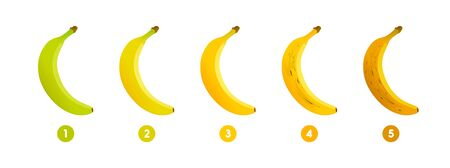 Banana ripeness. Stages of growth and ripening of banana fruit. Selection of ripe banana. Vector illustration Foto de archivo - 136021408