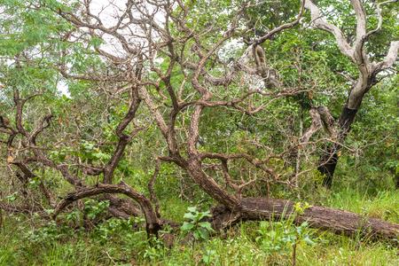 Chapada das Mesas in Maranhão Brazil.