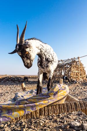 Danakil depression Ethiopia, Mekelle.
