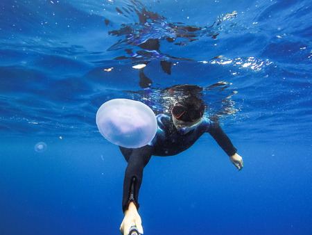 Observation of jellyfish during snorkeling in Dahab in Egypt.